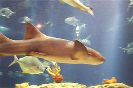Fish and sharks , Amy - January 2013