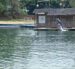 Pink Dolphins., Ushmita H - August 2009