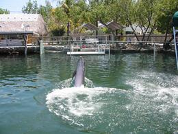 Dolphin showing off his aquatics tricks - October 2009