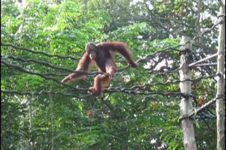 Singapore Morning Zoo Tour - Singapore