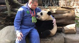 Panda cuddles. , Matthew C - November 2017