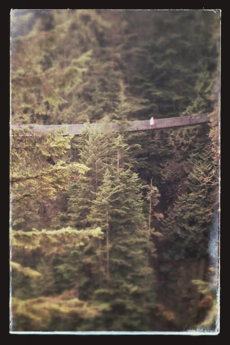 Skip the Line:Capilano Suspension Bridge Park Ticket w/Shuttle from Vancouver photo 30