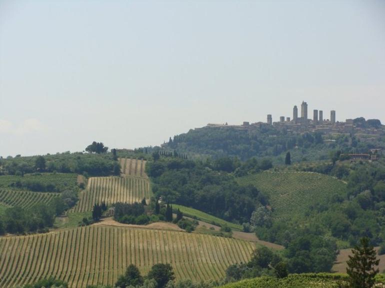 Chianti Farm & Wine vineyard - Florence