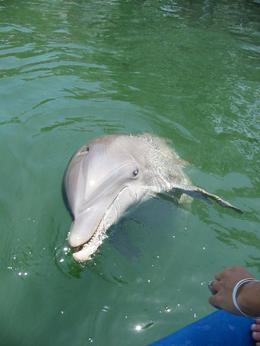 Dolphin greets visitors to the cove - October 2009
