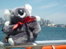 Here are a few photos of Katy Koala enjoying her recent visit to Sydney. She said she had a great time :-) , Eric M - November 2012