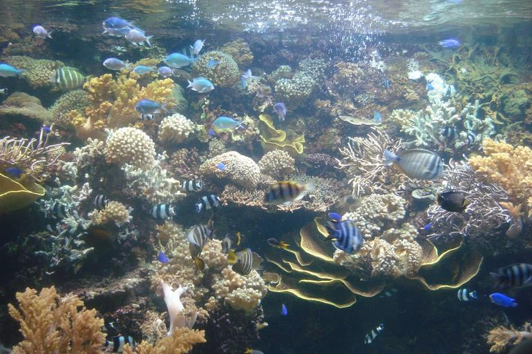 Oceanarium on Sentosa Island - Singapore