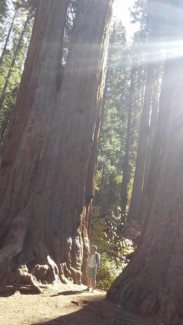 Feeling very small and humbles by nature in the Sequoia Grove , Kylie D - November 2013