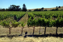 This is where wine comes from!, Jules & Brock - July 2012