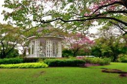 Botanical gardens in Singapore - October 2012