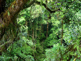 Mid level view through the Costa Rica rainforest from aerial tram - June 2011