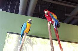 Parrots , Amy - January 2013