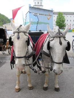 For a price, you can have a nice horse buggy ride in downtown Salzburg., Brian H - May 2009