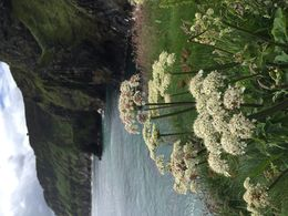 This is one of many sights to see as you walk back from Carrick-a-Rede Rope Bridge. , Agnes G - July 2016