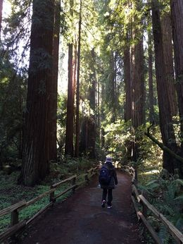 walking along the trail of the Muir Woods , Shanerh P - February 2016