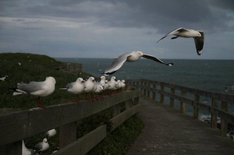 Phillip Island, Melbourne - Melbourne