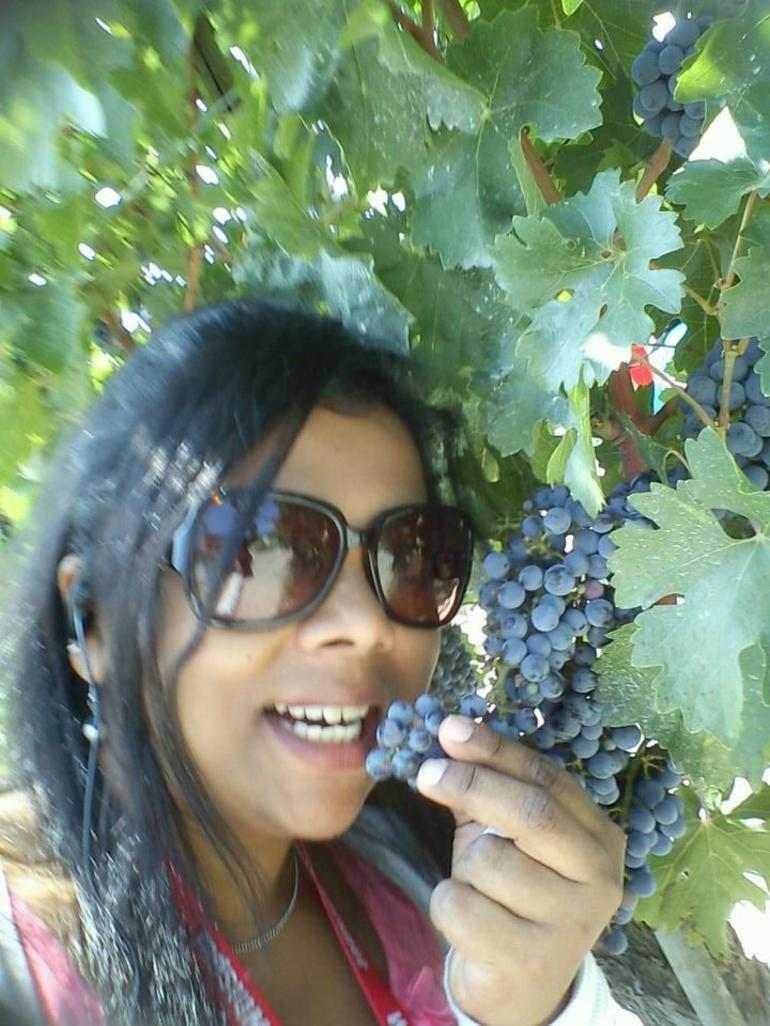 vinyard - Florence