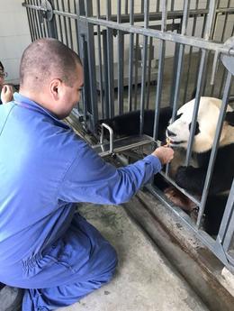 Feeding panda. , Matthew C - November 2017