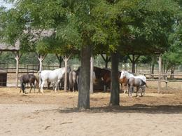 Brood mares and foals. , jed25 - September 2016