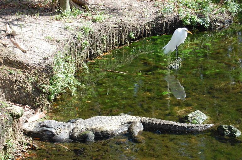 Homosassa wildlife park - Orlando