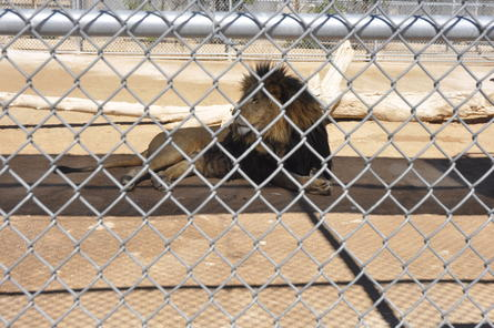 Lion habitat ranch general admission with optional behind the scenes