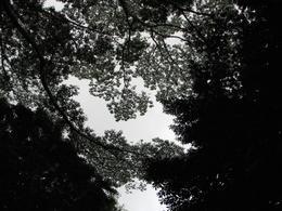 Manoa - Rainforest - December 2007