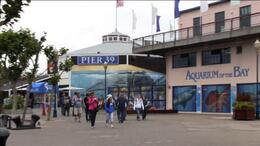 The San Francisco Waterfront Segway Tour brings you to Pier 39 and Fisherman's Wharf. - July 2011