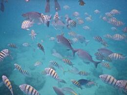 The fish , David H - September 2014