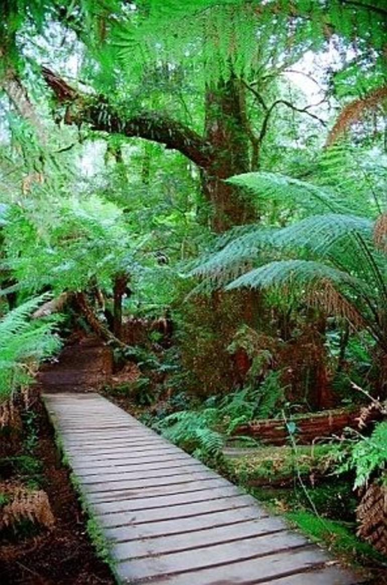Walkway in Maits Rest Rainforest Walk - Melbourne