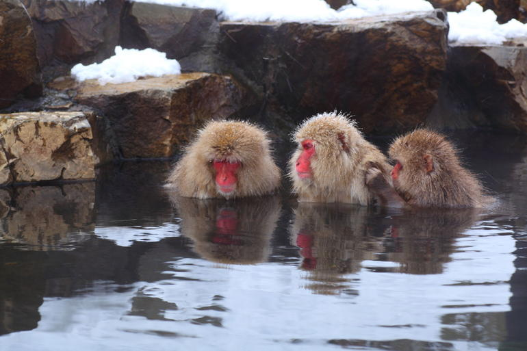 Zigokudani Monkey Park - Family Relaxing.jpg - Tokyo