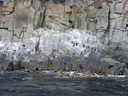 Formation of Dolomite rock along the east coast of Bruny Island , JENNIFER T - March 2012