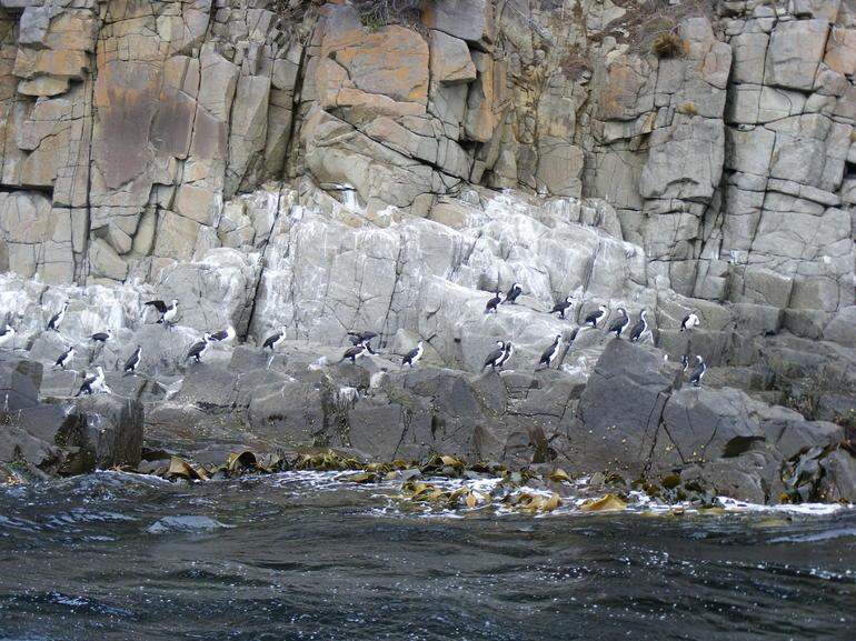 Dolomite Rocks - Hobart