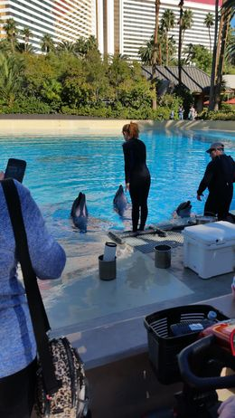 Siegfried and Roy's Dolphin habitat at the Mirage. , ashes - February 2016