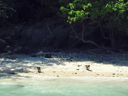 Monkey Beach, we only got to see 3! , Leslie H - February 2016