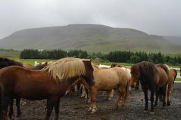 horses , Suzy T - September 2012