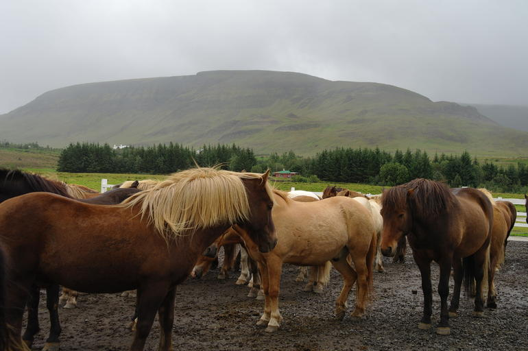 Viking Horse Riding and Golden Circle Tour from Reykjavik photo 38