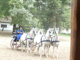 part of the horses show , Quincou m - October 2012