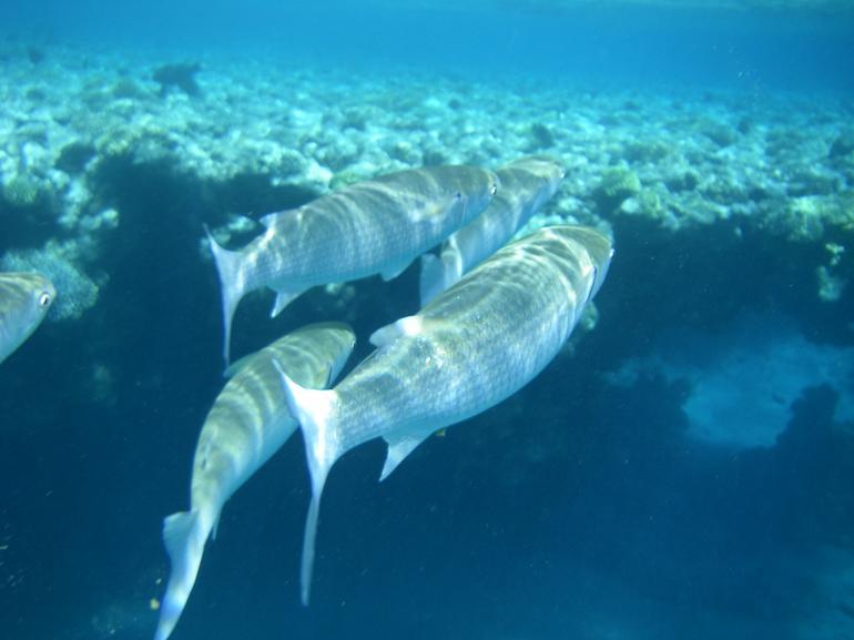 Fish up close - Sharm el Sheikh