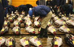 A fish dealer checking the quality of each Maguro (tuna) - May 2013
