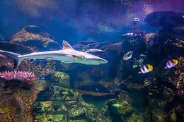 Shark Reef Aquarium at Mandalay Bay., Viator Insider - December 2017