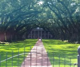 Oak Alley Plantation -so beautiful! , Theresa - January 2017
