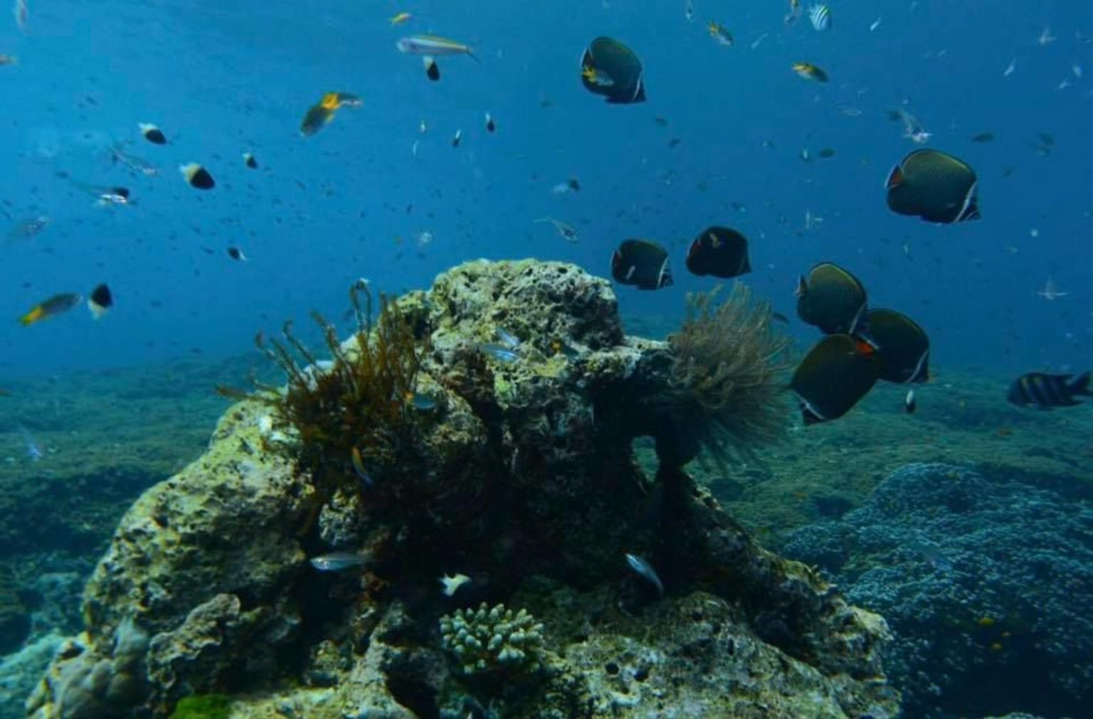 MÁS FOTOS, Similan Islands Snorkel Tour by Fantastic Similan Travel from Phuket