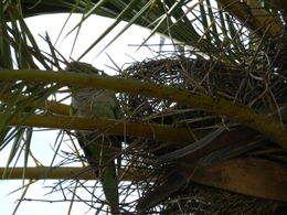 We were amazed at the combination of tropical and non-tropical plants. Palm trees and deciduous trees. We came at the end of Oct. Great weather, cool, no rain. Parrots have taken up residence..., Karen S - October 2015