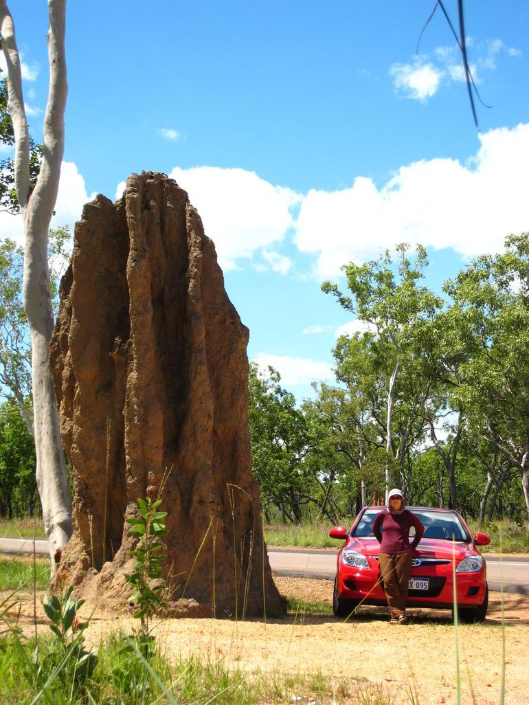 Giant Catedral Termite Mount - Darwin