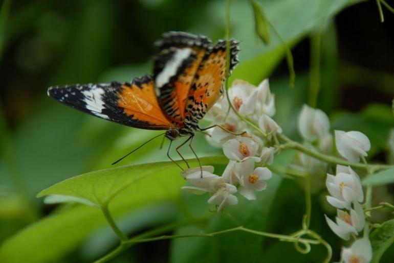 Penang Butterfly Farm & Botanical Garden - Penang
