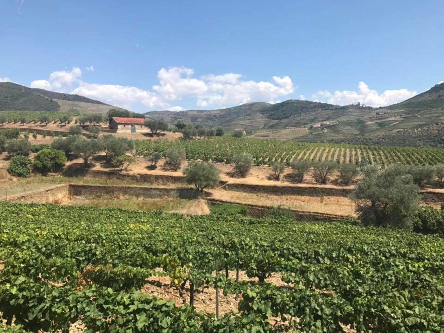 MÁS FOTOS, Douro Valley Historical Tour with Lunch, Winery Visit with Tastings and Panoramic Cruise