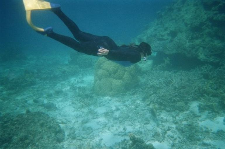 Great Barrier Reef Snorkel - Cairns & the Tropical North