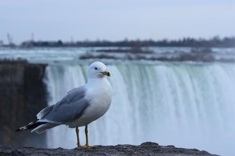 Niagara Falls at Cananda - New York City