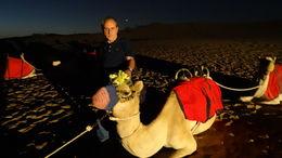 Camels under the stars , JOSE MARIA M - November 2015