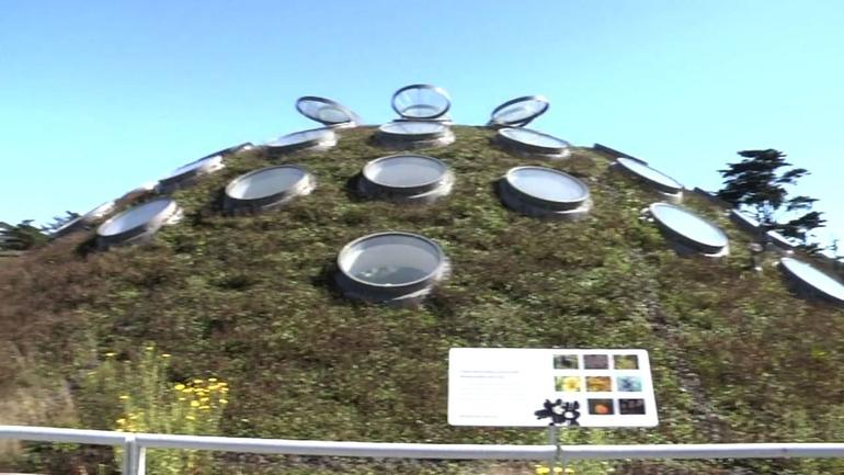 Living Roof - San Francisco