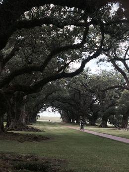 Beautiful 300yr old oak tree , George G - September 2015
